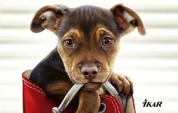 Knižná novinka: Psia cesta domov